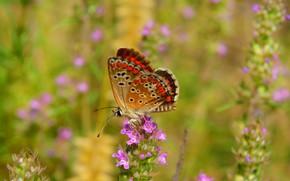 Picture Macro, Flowers, Butterfly, Flowers, Macro, Butterfly