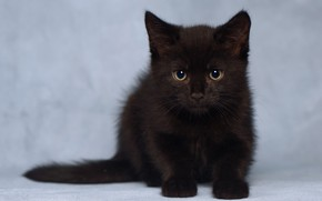 Wallpaper black kitten, look, kitty, background, baby