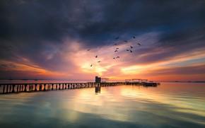 Picture sea, sunset, birds, bridge