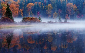 Picture autumn, forest, reflection, trees, nature, fog, river