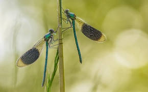 Picture grass, background, dragonfly