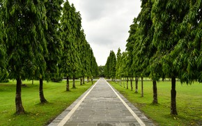 Picture greens, grass, trees, Park, Indonesia, track, the sidewalk, Bali