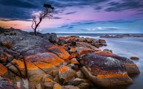 Picture Tasmania, stones, horizon, the sky, Australia, tree, sea, Binalong Bay, coast