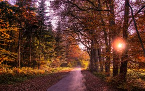 Wallpaper leaves, forest, autumn, trees, road, the sun