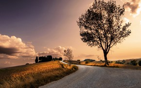 Wallpaper tree, road, nature