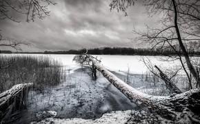 Picture winter, snow, lake, tree