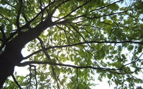 Picture the sky, leaves, light, rendering, tree, branch, spring, the air
