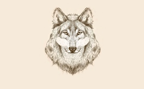 Picture wolf, minimalism, head, light background, wolf