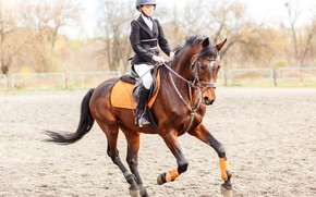 Picture horse, training, riding
