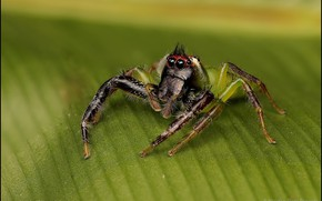 Picture macro, sheet, spider