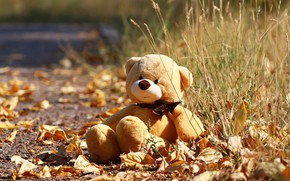 Picture autumn, toy, bear, leaves, weed