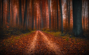 Picture autumn, forest, trees, nature, track