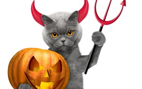 Picture cat, holiday, the demon, Halloween