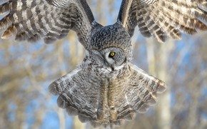 Picture Owl, Bird, Flight, Wings