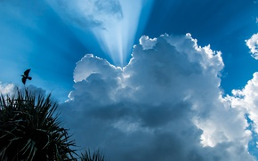 Picture the sky, clouds, rays, palm trees, bird