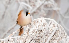 Picture winter, nature, bird