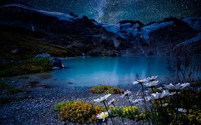 Picture the sky, stars, flowers, mountains, night, lake, stones, shore, chamomile, Switzerland, Alps
