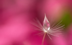Picture water, nature, Rosa, drop, blade of grass