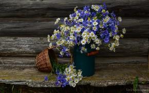 Picture summer, flowers, chamomile, still life, cornflowers