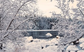 Picture winter, forest, water, snow, trees, landscape, nature, river
