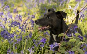 Picture flowers, dog, bells