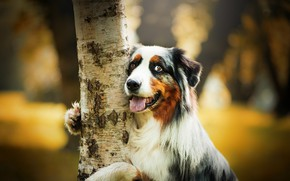 Picture each, tree, dog