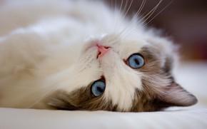 Picture Macro, Cat, Cat