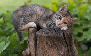 Picture kitty, stump, cute