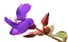 Picture flower, nature, petals, stem, exotic