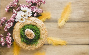 Picture egg, moss, Feathers, Branches, Easter, socket, hay, Holiday, chrysanthemum, decor