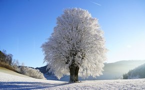 Wallpaper glade, the sky, the sun, frost, winter, snow, tree