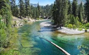 Picture forest, river, coniferous