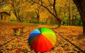 Picture Autumn, Trees, Umbrella, Park, Fall, Foliage, Bench, Track, Park, Autumn, Umbrella, Colors, Trees, Falling leaves, …