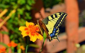 Wallpaper Bokeh, Macro, Macro, Flower, Butterfly, Flower, Butterfly