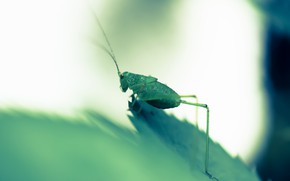 Picture nature, sheet, grasshopper green