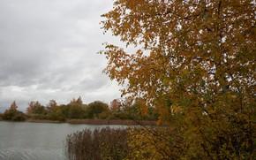 Picture autumn, trees, lake, birch