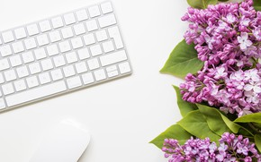 Picture flowers, mouse, keyboard, lilac