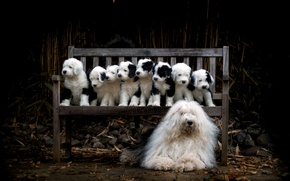 Picture dog, puppies, bench