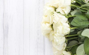 Picture background, bouquet, buds, White roses
