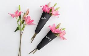 Wallpaper petals, gift, bouquet, Lily