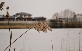 Picture grass, macro, house, river