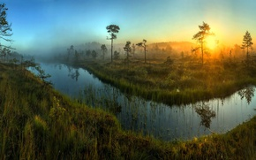 Picture grass, trees, nature, dawn