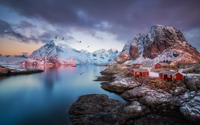 Picture mountains, birds, rocks, Norway, the village, the fjord, The Lofoten Islands