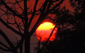 Picture the sun, sunset, tree, silhouette