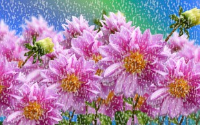 Picture Flowers, Colored, Rain
