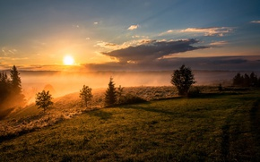 Wallpaper forest, the sky, grass, the sun, trees, fog, dawn, hill