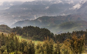 Picture forest, trees, mountains, fog, field, panorama, Vietnam, plantation, Sa Pa