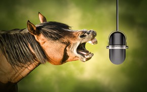 Picture horse, microphone, singing