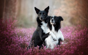 Wallpaper nature, dogs, background
