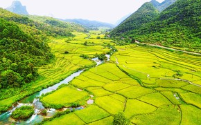 Picture road, greens, forest, mountains, river, field, valley, Vietnam, plantation, Bac Can